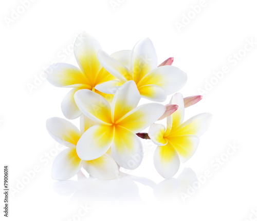 Foto op Canvas Frangipani frangipani flower isolated white background
