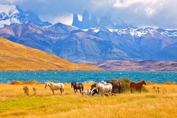 Beautiful thoroughbred horse grazing