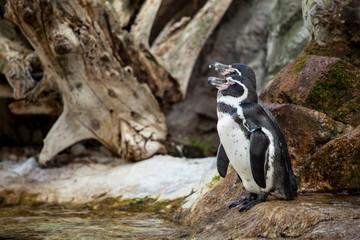 Cute penguins on rocks in water