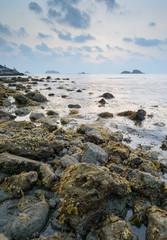 brown seaweed algae on rock in sunset
