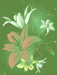 FLOWERS LILY BACKGROUND