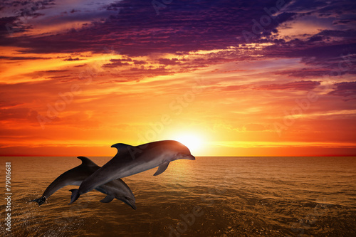 Jumping dolphins - 79016681