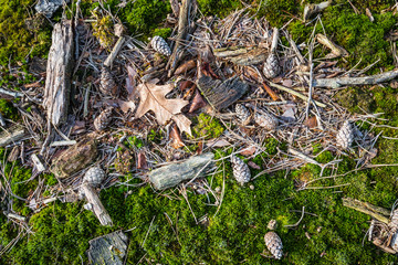 Fallen leaves, sticks  and pine cones on the floor of a forest f