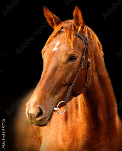 Fotobehang Paarden Portrait of red horse on a black background