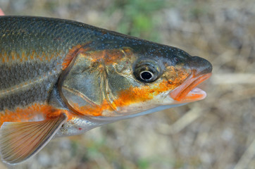 Head of fish 5