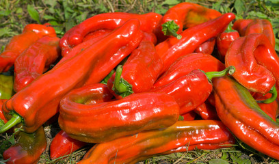 Red peppers 13