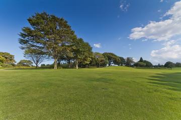 芝生 背景 lawna grass plot