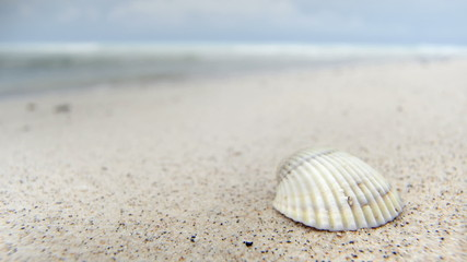 Empty beach with seashell on sand