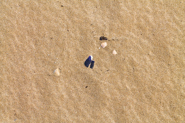 Sea shells on sand. Summer beach background. Top view