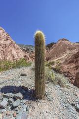 Cactus in Purmamarca, Jujuy, Argentina.