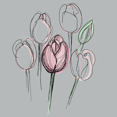 Tulip / Sketch of pink spring flowers