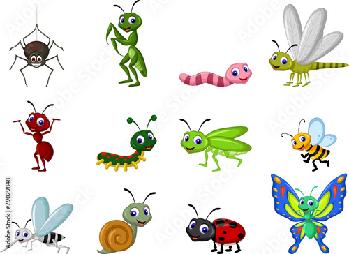 insect cartoon collection - 79029848