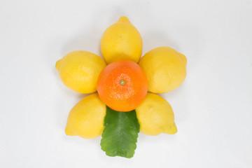 Limoni e Mandarino 2