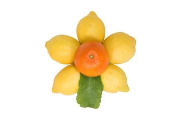 Limoni e Mandarino 3
