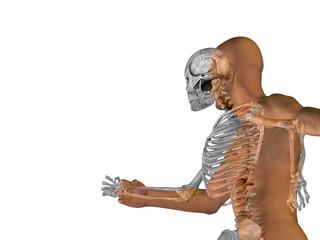 3D human man anatomy for health or medicine
