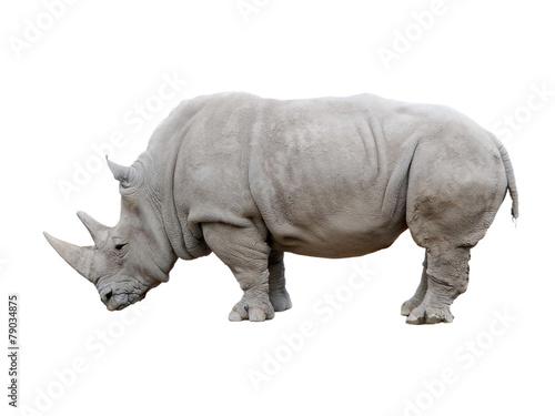 Foto op Canvas Neushoorn Rhino