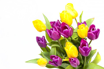 big beautiful bouquet of purple and yellow tulips