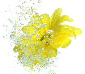 Flower in sparkling water