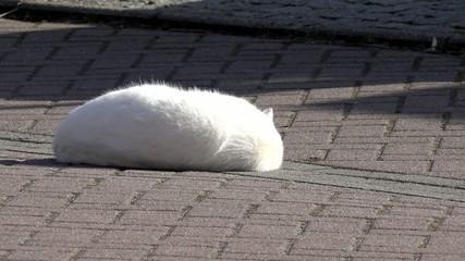 Katze wälst sich auf der Straße