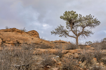 pine tree on sandstome cliff