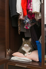 Cat is lying in the cupboard for clothes