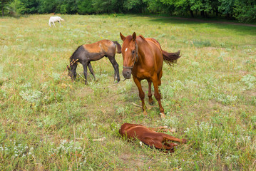 Horse family on the summer pasture