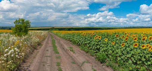 Panoramic Ukrainian rural landscape at summer season