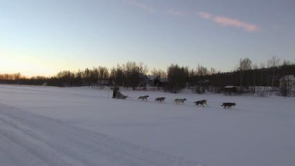 Musher finlandais sur un lac gelé