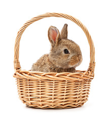 Bunny in a basket isolated on white background