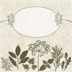 Spices and herbs. Illustration with place for text,  can be used