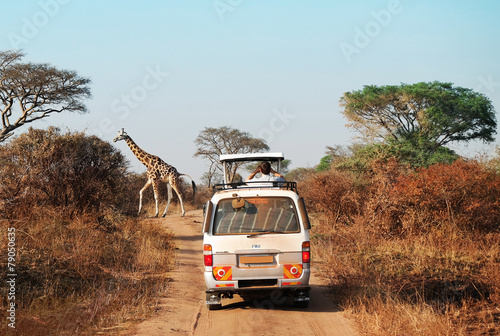 Canvas Overige Giraffe crossing
