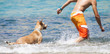 Dog playing in the water with its master