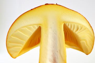 Edible Amanita Caesarea or Caesar's Mushroom 5