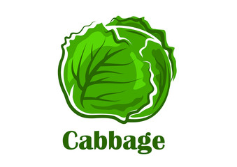 Cabbage vegetable with crunchy green leaves