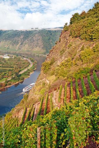 Fotobehang Canyon Steillagenweinbau am Moselsteigbei Dieblich über der Mosel