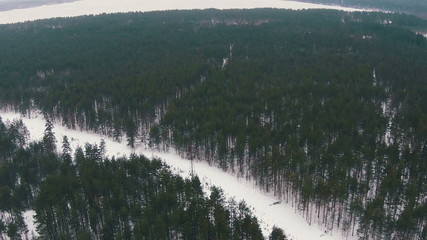Flying Above Winter Forest in Cloudy Weather, aerial view