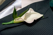 Mens Boutonniere - 79055626