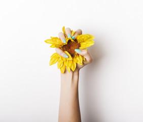 Female hand grasping sunflower