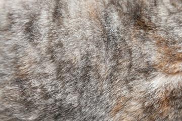Close up fur of a grey cat