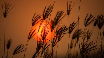 Orange light of the sun sets through the grass.