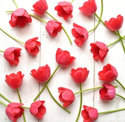 Red tulips on white wooden background © yonibunga