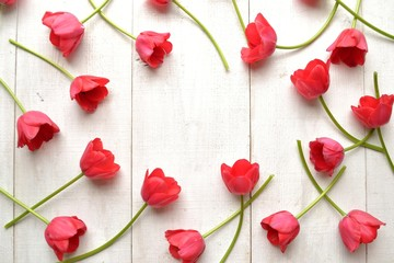 Red tulips on white wooden background.frame