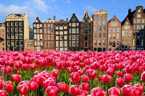Vibrant pink tulips with canal houses of Amsterdam, Netherlands Poster