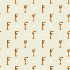 dachshund and trace pattern