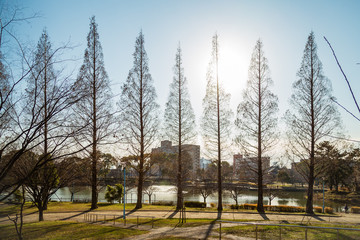 Row of bare trees in the park by the Yodo River