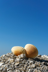 Seashells on rock