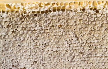 Sealed Honey Comb