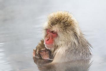 Snow monkey & baby in hot  spring at the jigokudani monkey paerk