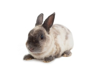 Adorable rabbit on white background