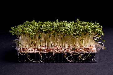 Fresh healthy Green Cress